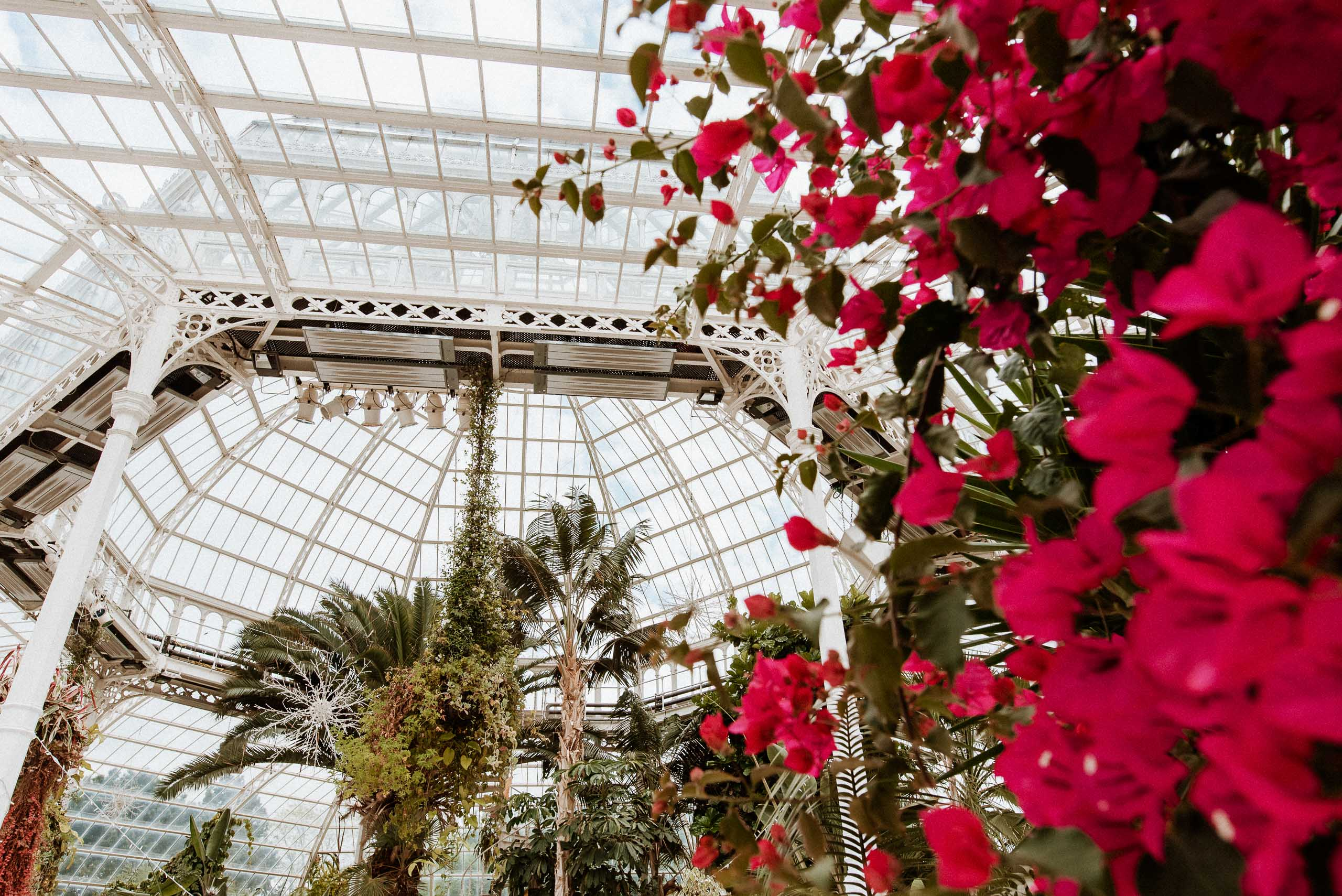 red botanicals inside Liverpool palm house